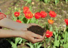 Mantillo y tierra vegetal